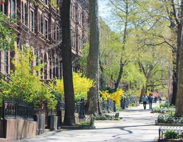 Park Slope New York City Neighborhood Photo