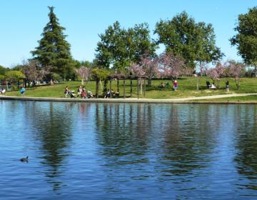 Lake Balboa Los Angeles Neighborhood Photo