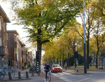Rivierenbuurt Amsterdam Neighborhood Guide