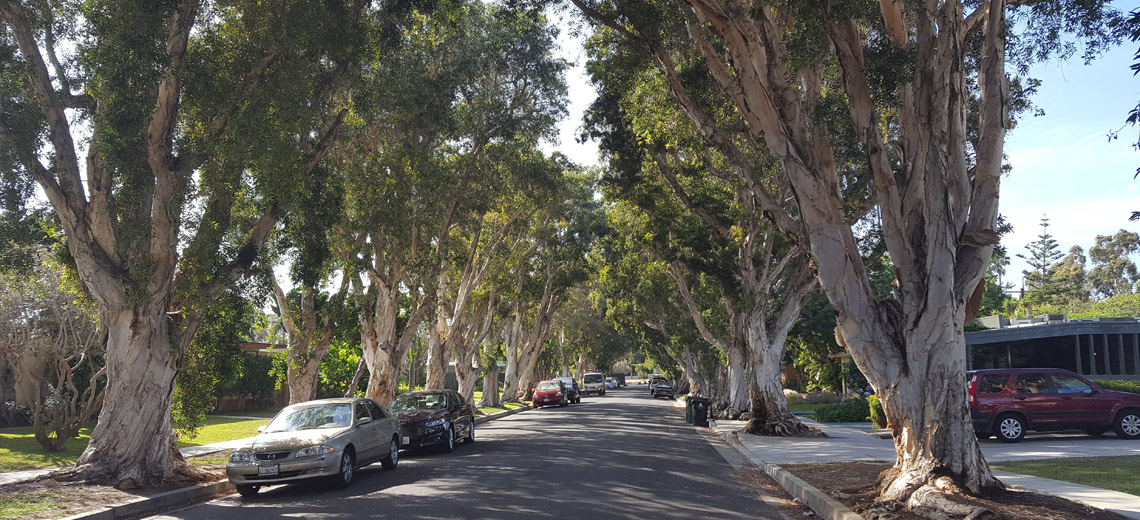 Mar Vista Los Angeles Neighborhood Photo